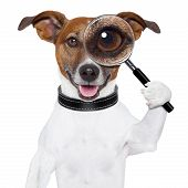 dog with a magnifying glass and searching poster