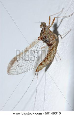 small ephemera perched on a white wall poster