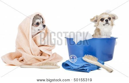 Wash The Dogs