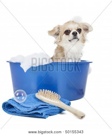 Wash The Dog