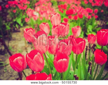 Retro Look Tulips