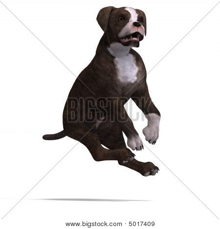 very cute young dog over white with Clipping Path poster