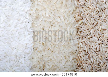 Three Rows Of Rice Varieties