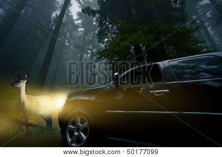 Watch For Wildlife. Large SUV in Front of a Deer in Deep Forest at Night. Road Danger at Night. Deer Crossing. Wildlife Photo Collection. poster