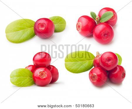 Forest berry cowberry with leaves set isolated.