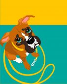 vector illustration of Boxer puppy with leash poster