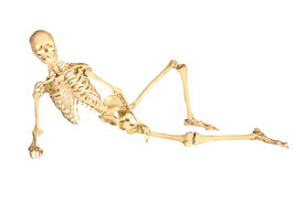 Human Skeleton Reclined