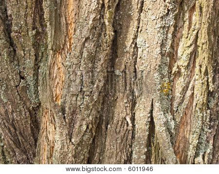Background From A Brown Bark Of A Tree
