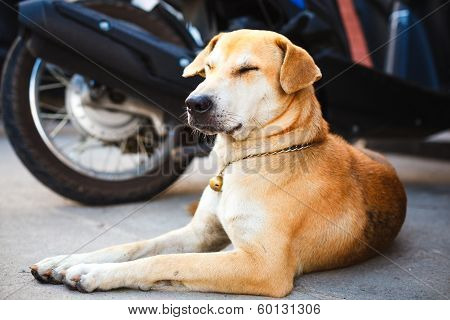 dog rest on the road