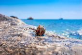 Hermit crab going out from seashell with ocean and boats in the background poster