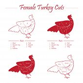 Turkey meat cut scheme on red and white style - vector poster