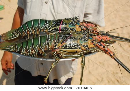 A beach restaurant waiter is holding a tray with lobsters. poster