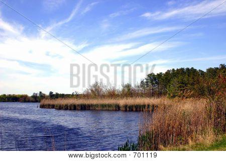 New Jersey Wetlands