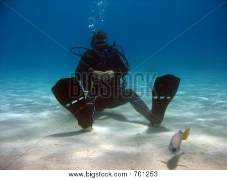 Diver Sitting In Sand Looking At A Fish