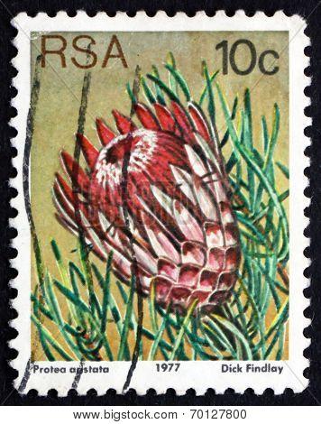 Postage Stamp South Africa 1977 Ladismith Sugarbush, Flowering P