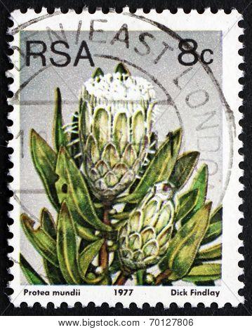 Postage Stamp South Africa 1977 Forest Sugarbush, Flowering Shru