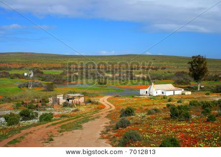 Namakwaland farm with flowers in south africa poster