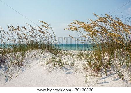 Sunny Ocean Beach Dunes With Sea Oats