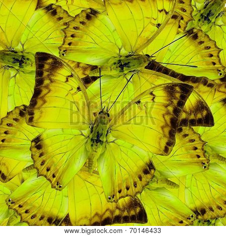 Beautiful yellow butterflies in full framing mixed as the great background texture