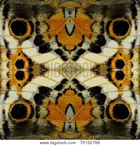Exotic Brown And Black Background  Texture Made Of Blue Pansy Butterfly Wing Pattern