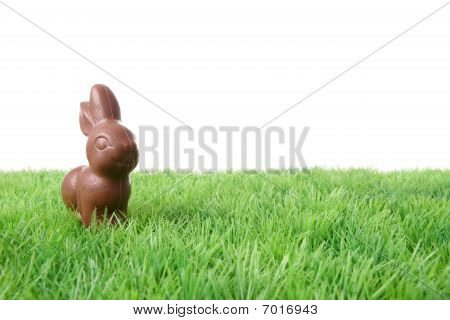 Chocolate Rabbit