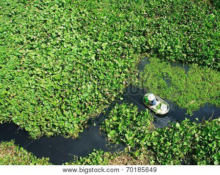 People Harvesting Vegetable In Polluted Water