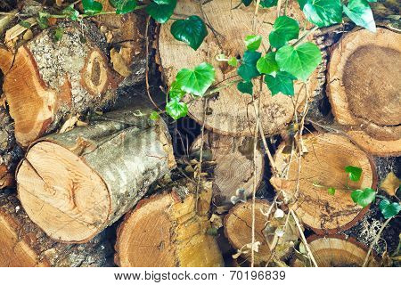stack of old firewood overgrown by loach poster