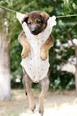 Puppy dressed in clothes for children and hung on the rope with clothes-pegs outdoor poster