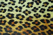 the closeup of leopard pattern textured background poster