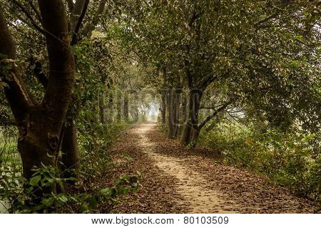 Path Meandering Through Trees