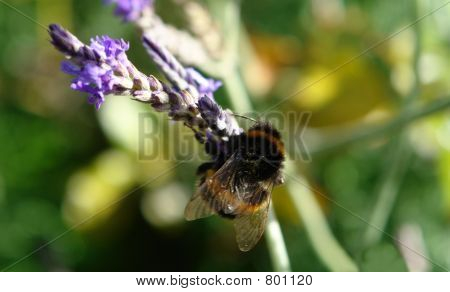 Busy as a Bee 02