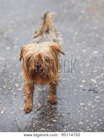 Stray Dog In The Rain