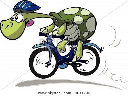 turtle cyclist