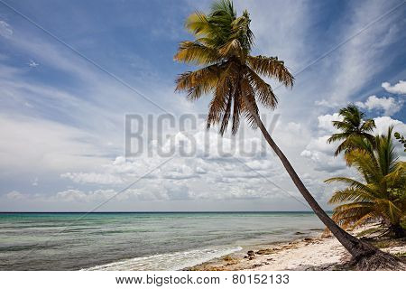 Palm Tree In Sahona Island