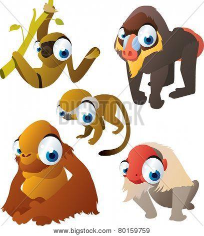 vector isolated cartoon cute animals set: monkeys: saimiri, baboon, orangutan, sloth, macaque