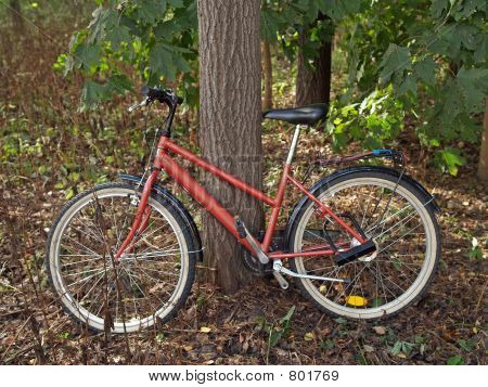 Parked bicycle in a forest