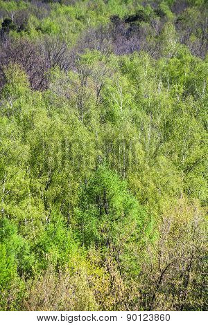 Above View Of Green Leafage In Spring