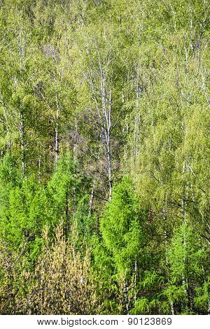 Above View Of Green Crones Of Trees In Spring