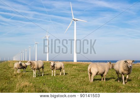 Long Row Dutch Wind Turbines With Herd Of Sheep In Front