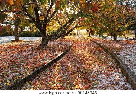 Autumn Ice