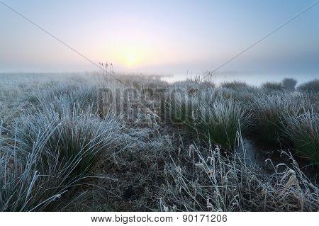 Cold Misty Sunrise On Swamp