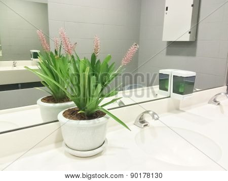 Ornamental plants in buildings  for the beautiful garden decoration.