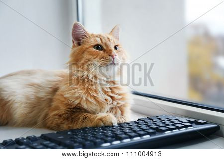 Red cat with computer keyboard lying on window board, close up