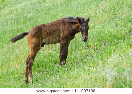 Cute young foal on a spring pasture