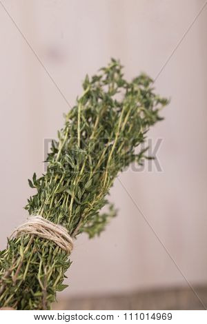 Aromatic Rosemary Herb