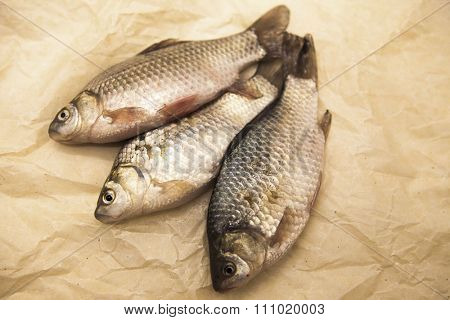 A  fresh carp live fish lying on a on paper background . Live fish crucian Carassius auratus gibelio.