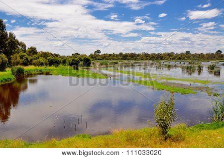 Beelier Wetlands: Peaceful Reflections