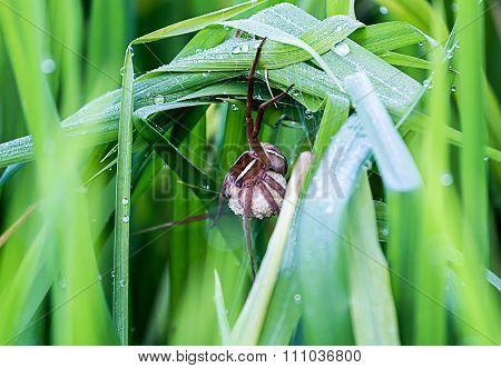 Spider Nesting