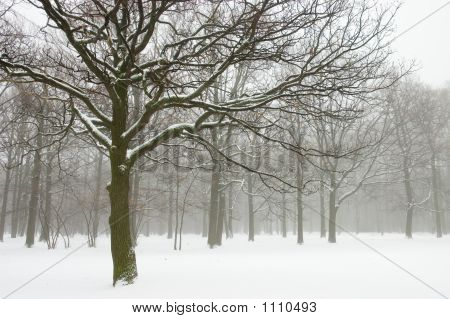 Misty Winter Trees Landscape