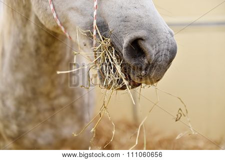 White Horse Eating Hay Inside A Pen